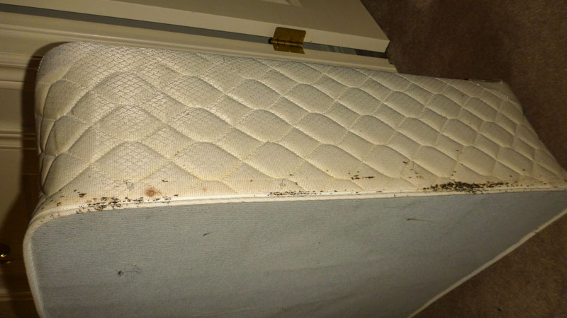 Upper edge of box spring showing bed bug black excrement