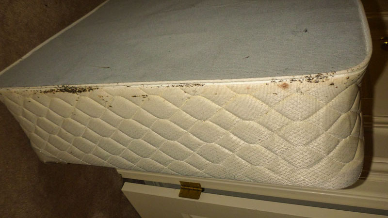 Upper Edge of a Box Spring is a Favourite Area for Bed Bugs to Nest