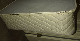 Bed Bugs in Upper Edge of Box Spring
